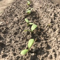 減農薬野菜5